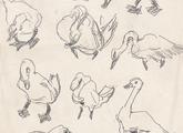 Bocetos de patos