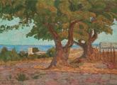 Los antiguos ombúes de Punta Carretas